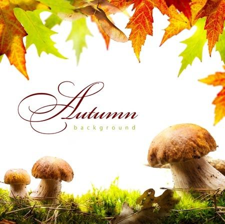 Autumn outside